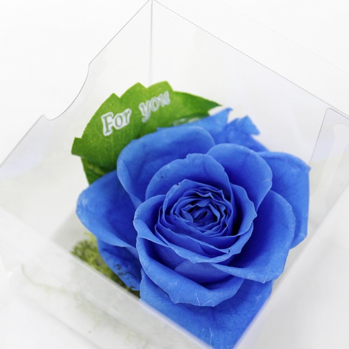 Clear Rose Blue http://www.phy-f.com/products/detail.php?product_id=236