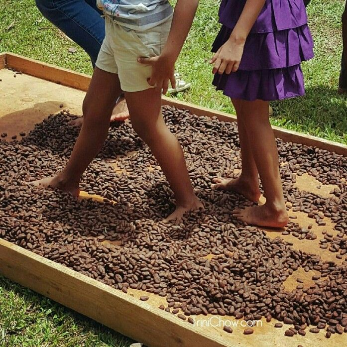 """Little feet """"dancing the cocoa"""" at an International Chocolate Day celebration at the Green Market Santa Cruz in Trinidad.  """"Browncocoabeans, spread on the floor of an oldcocoahouse, are being sun- dried, their pungent scent filling the air. """"Sometimes, wedanceit to polish the beans."""""""