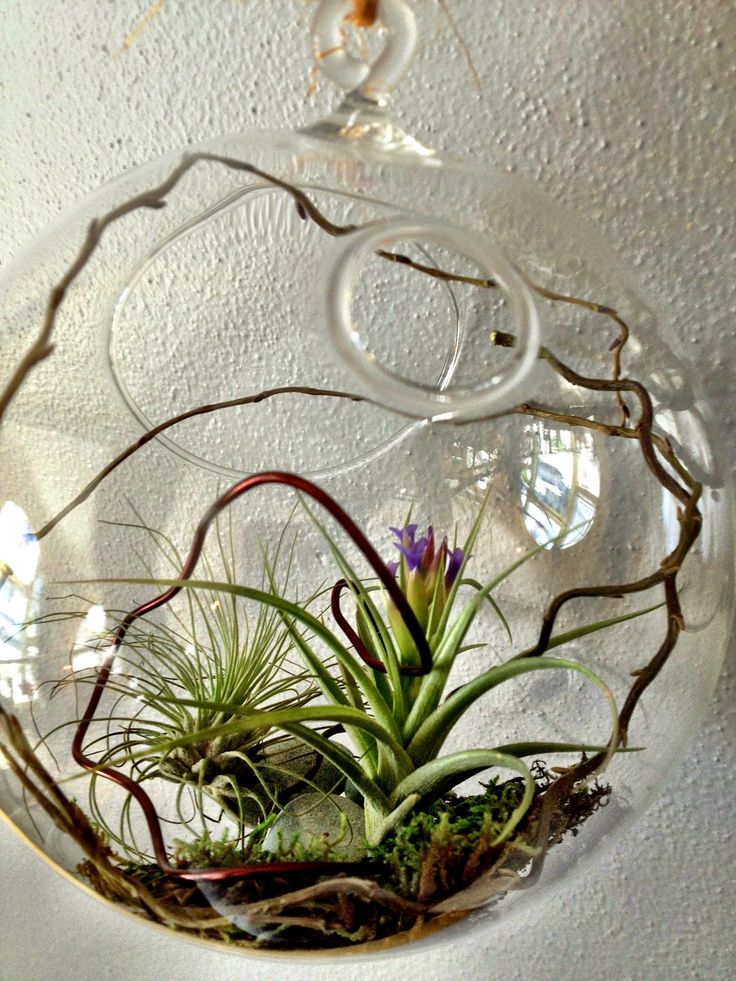 General : Air Plants Easy To Love The Difference An Air Plant Makes ~ Resourcedir Home Directory