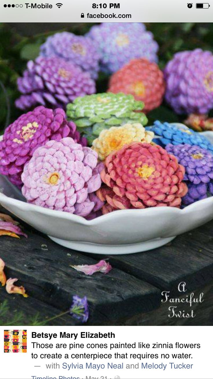 Zinnia pine cones things to make pinterest pine for Things to make with fir cones