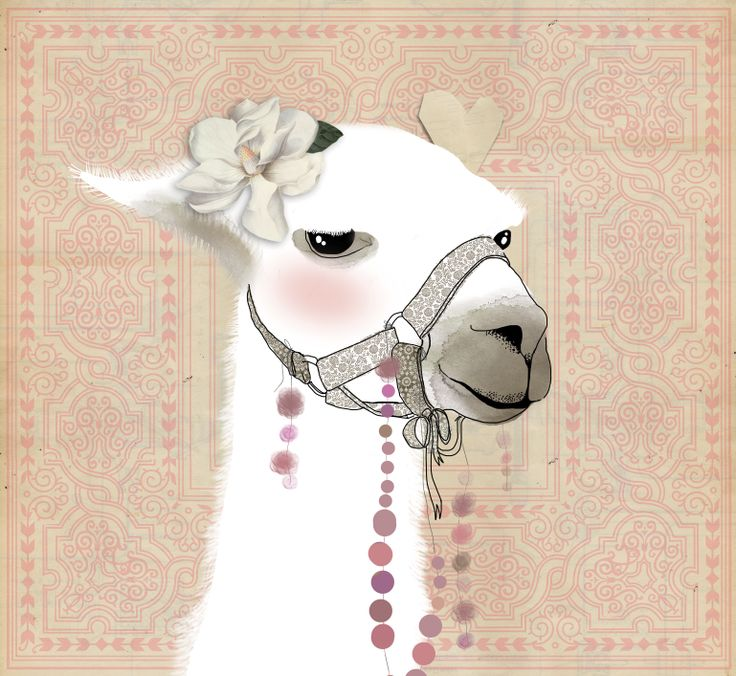 35 mejores imgenes de llamas en Pinterest  Llama llama Llamas y