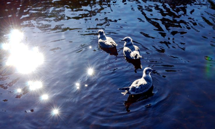 Birds in Kainiemi