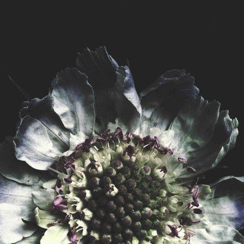 FLOROGRAPHY - Ashley Woodson Bailey