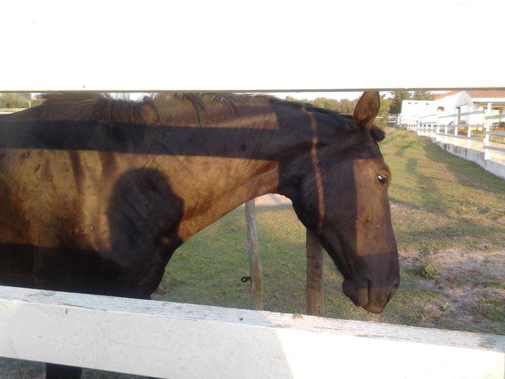 Os cavalos do Centro Equestre - 7 Quintas