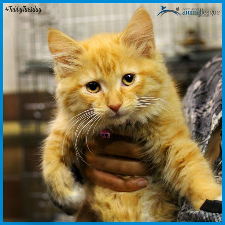 The holiday might be over, but why not celebrate This little guy is just  one of the many cuddly kittens waiting to meet you! Stop by our adoption  center at ...