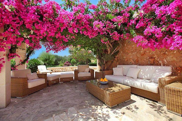 Arbuste méditerranéen qui respire l'exotisme-Bougainvillier