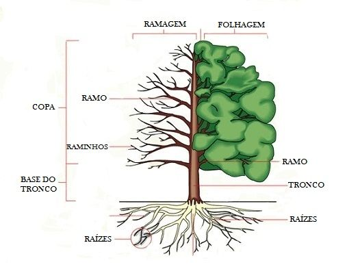 partes de uma rvore learning portuguese pinterest