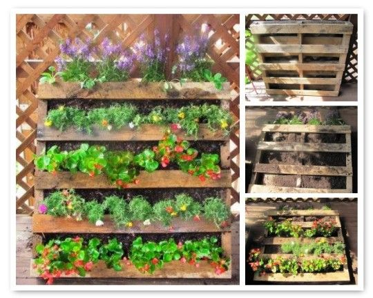vertical gardening using pallets gardening ideas