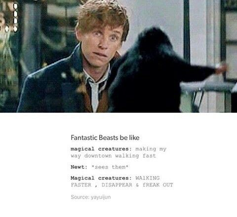 Fantastic Beasts:Making my way down town,walking fast,Newt just passed,and oh crap he saw me...*piano music*
