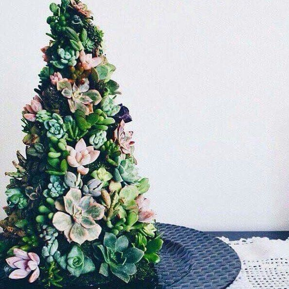 Succulent Christmas Trees Mini Christmas Trees Made With Succulents Alternative Christmas Tree Australian Christmas Tree Mini Christmas Tree
