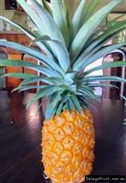 Pineapple F180