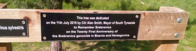Cone tree in Bede's Jubilee Woods, that was planted in remembrance of Srebrenica massacre in Bosnia during the war 1995 war and breakup of Yugoslavia