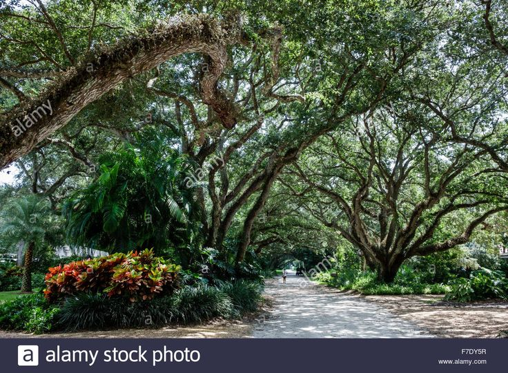 Vero Beach Florida North Hutchinson Orchid Island Ladybug Lane