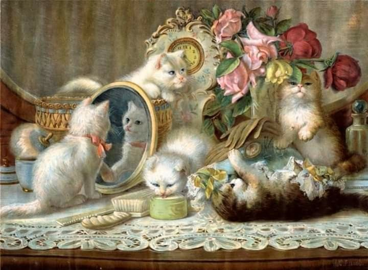 Pin On Cat Family