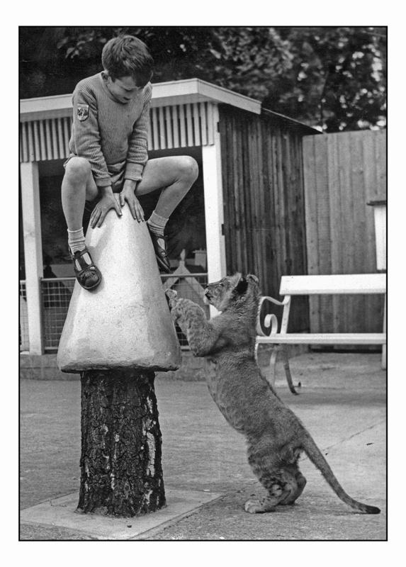 Mark Duggan with lion cub, Patrick. 1964