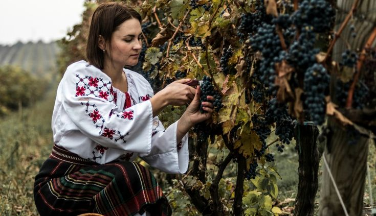 7 Reasons To Visit Moldova Wine Country