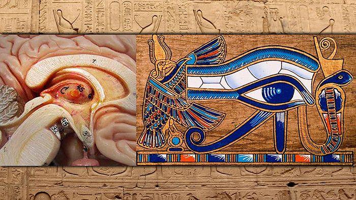 Sabiduría alienígena: La Glándula Pineal y el más grande secreto de todos los tiempos       Algunos le llaman el tercer Ojo otros le dic...