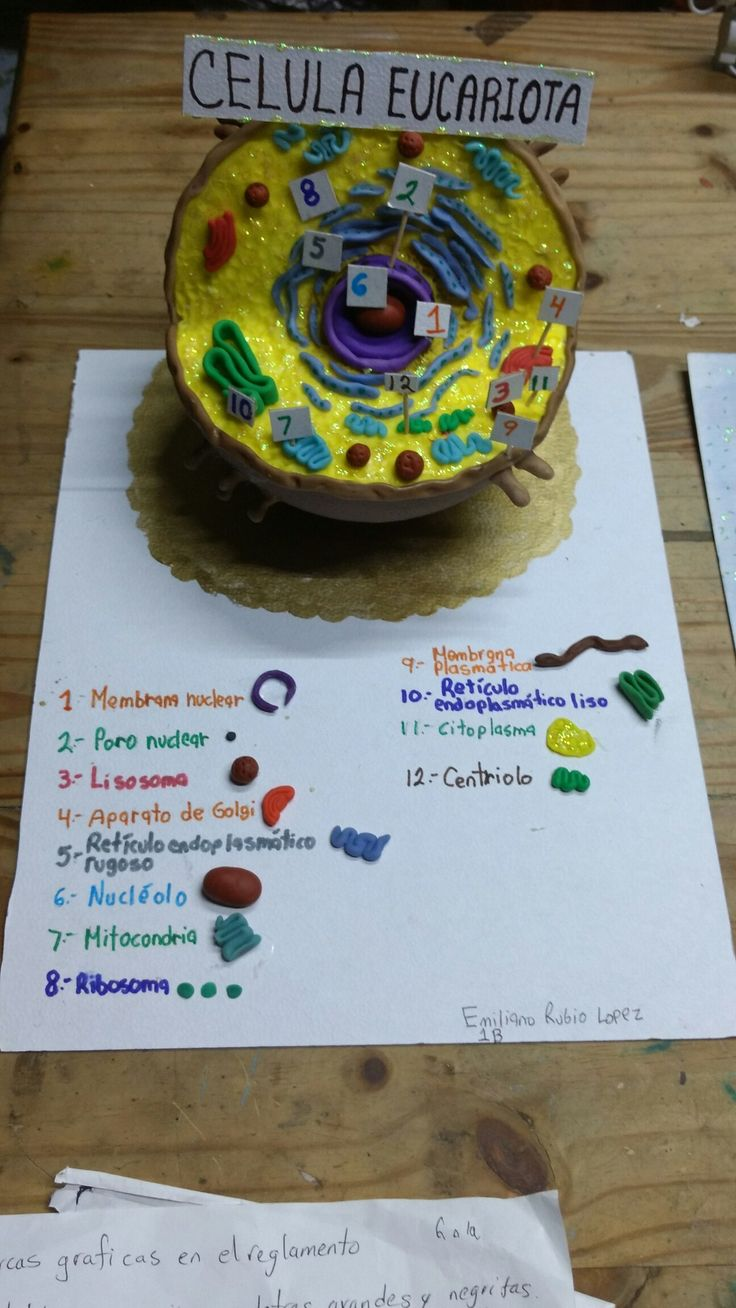 Célula Eucariota animal. #bombonideas