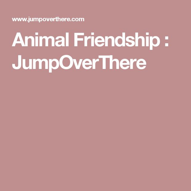 Animal Friendship : JumpOverThere