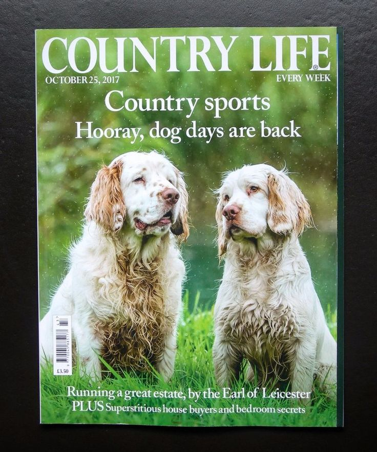 COUNTRY LIFE OCTOBER 25 2017 CLUMBER SPANIELS