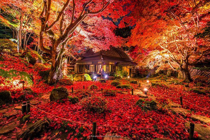 晩秋を彩る圧巻の赤の世界 滋賀県近江八幡にある教林坊、ついに最高のタイミングで見ることが… - ツイナビ   ツイッター(Twitter)ガイド