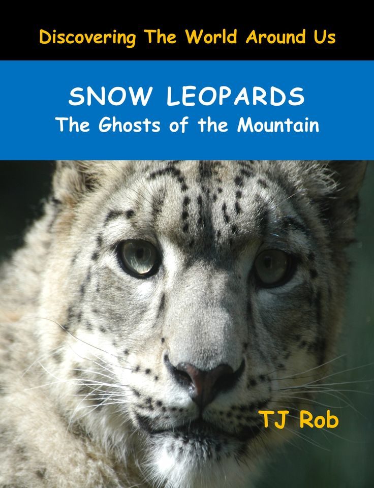 Snow Leopards are the rarest and most elusive creatures. They are seen so rarely by humans they have been called the Ghosts of the Mountain.  #snowleopard #bigcats #leopard #endangered #kidsbooks