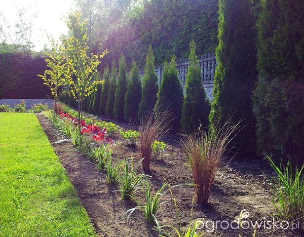 Moja codzienność - ogród Oli - strona 764 - Forum ogrodnicze - Ogrodowisko