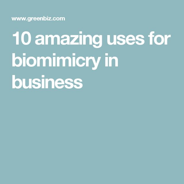 10 amazing uses for biomimicry in business