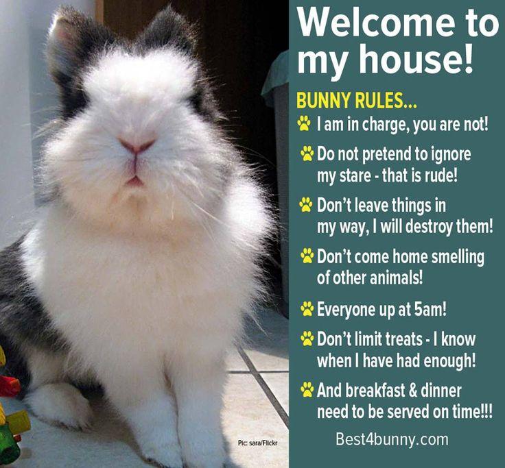Bunny Rules Www Best4bunny Com Rabbits Pinterest