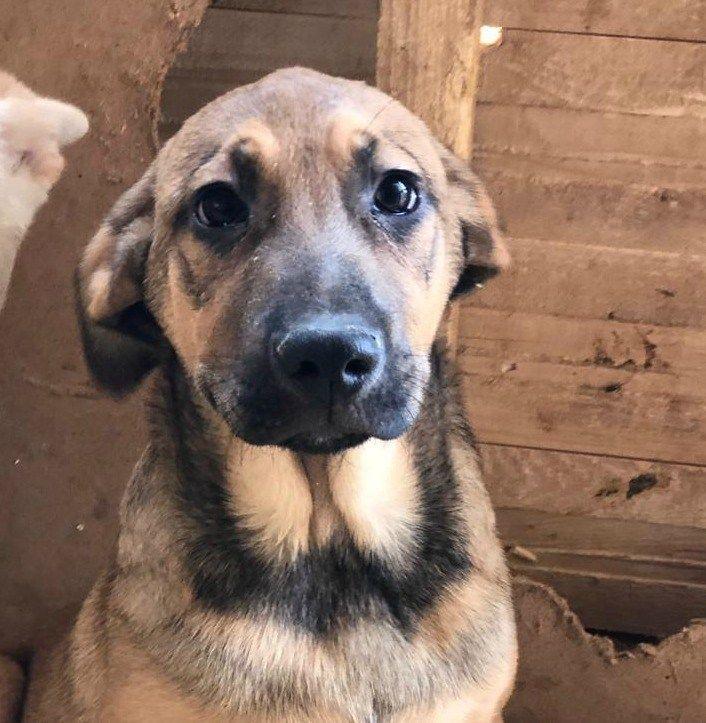 Felix Hundehilfe Russland Kleine Welpen Tierheim Hunde