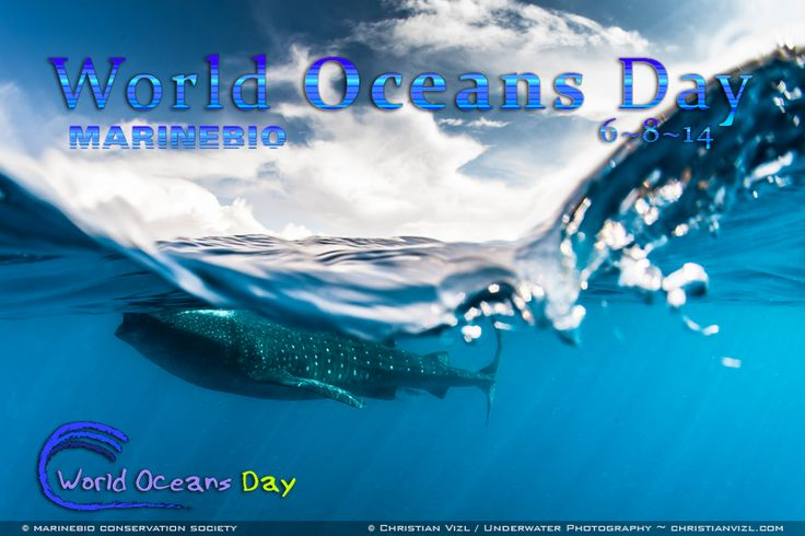 Happy World Oceans Day 2014!  Join the MarineBio Conservation Society: http://marinebio.org/membership.asp  Discover 101+ ways you can help protect ocean life: http://www.marinebio.org/oceans/conservation/local.asp  Learn more about World Oceans Day at http://worldoceansday.org  Photo Credit ~ Christian Vizl: https://www.facebook.com/christian.vizlmacgregor - http://www.christianvizl.com / Christian Vizl UWPhotography: https://www.facebook.com/ChristianVizlPhotography: Protection Ocean, Http Www Christianvizl Com, Whales Sharks, Conservation Society, Photos Credit, Christian Vizl, Ocean Life, Http Worldoceansday Org Photos, Vizl Uwphotographi