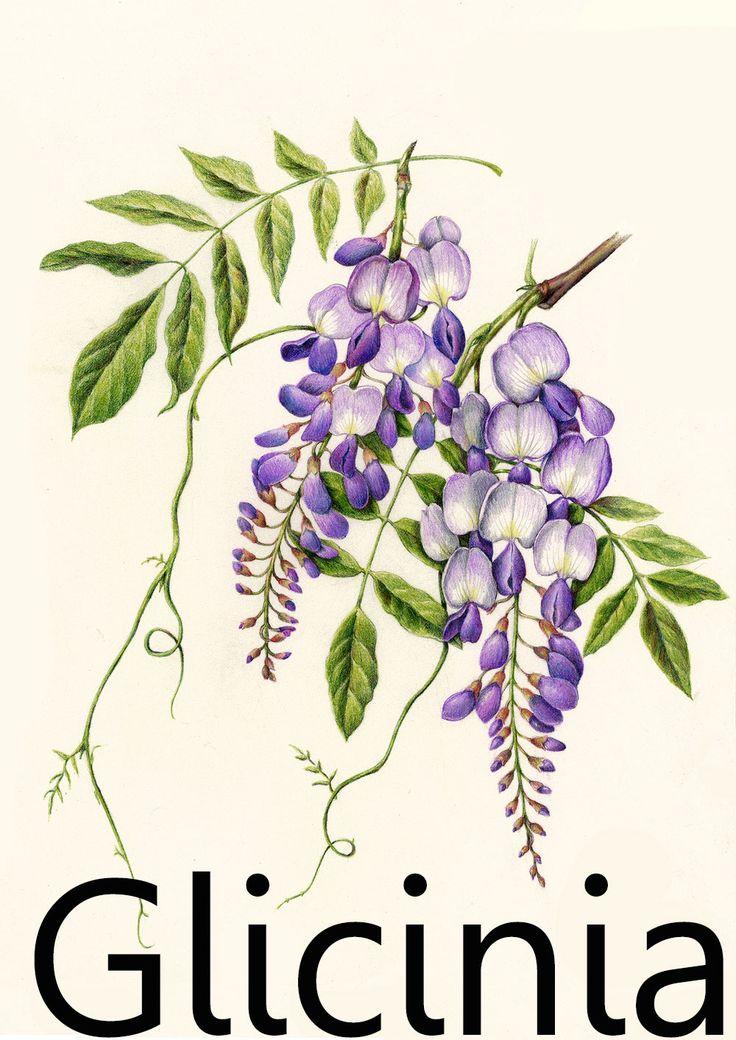 El lenguaje de las flores llega a nosotros desde la época victoriana