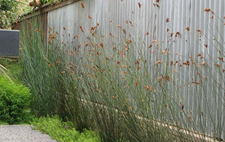 Corrugated iron fences - most of which are actually galvanised steel - are hardy and require minimal maintenance over their long lifespan.  #IronFences #GalvanisedSteel #SteelFences