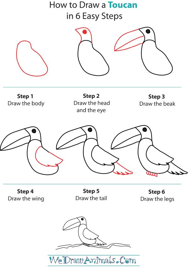 How to draw a toucan step by 600 866 pixels for How to draw doodles step by step