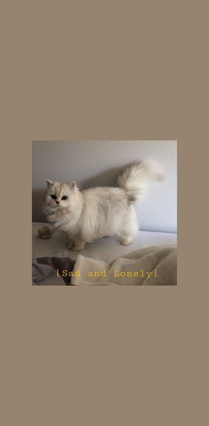 White Cat Aesthetics Wallpaper For You Catwalpapers White Cat Aesthetics Wallpaper Fur Sie White Cat Aest Kitten Wallpaper Cat Aesthetic Cute Cat Wallpaper