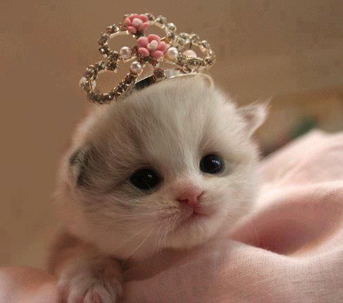 I just died from cute...<3