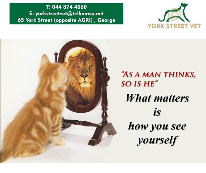 """What matters is how you see yourself"". We can learn from animals, as they have no inhibitions. Have a great last Sunday of the holidays. #ilovemypet #petcare #vets"