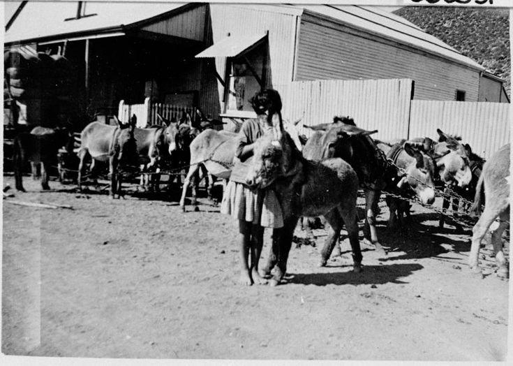066503PD: Donkey team, Connor, Doherty & Durack store, Wyndham, ca 1918 http://encore.slwa.wa.gov.au/iii/encore/record/C__Rb2861620?lang=eng