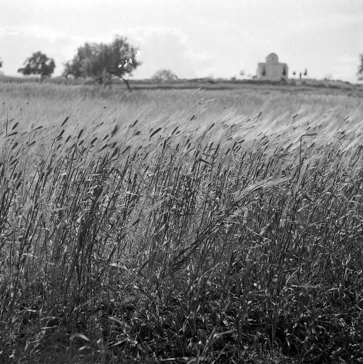 Κάρυστος 1950-55 φωτ.Β.Παπαιωάννου