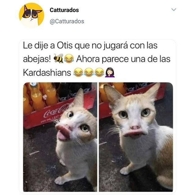 Sigueme En Instagram Memes Meme Espanol Venezuela Mexico Colombia Ecuador Humor Memes Memes Chistosisimos Memes Divertidos