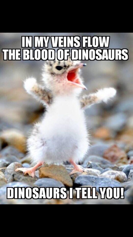 b34ba5179b0ffe4149028e341b311b3a penguin animals funny penguin 50 best funny memes images on pinterest funny memes, funny stuff,Cute Penguin Meme