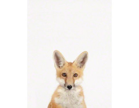 Baby Fox Little Darling