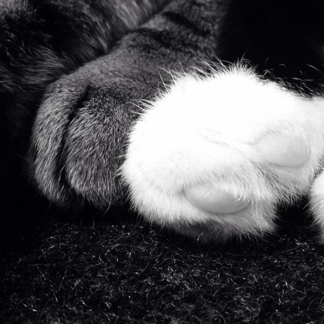 Oliver and puddles paws together