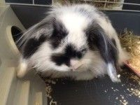 Lucy: Coniglietta in adozione