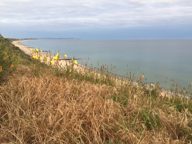 Southbourne Overcliff in the Summer #summernights #cliffflowers