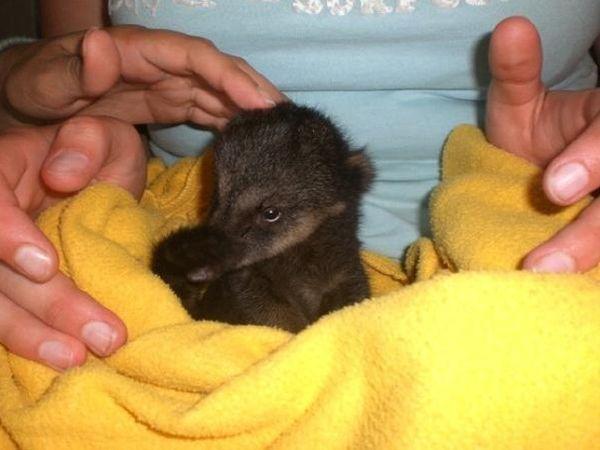 50 Photos Of Baby Snookum Bears