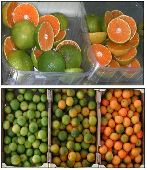 Limon Mandarino : es un híbrido entre mandarina y limón.