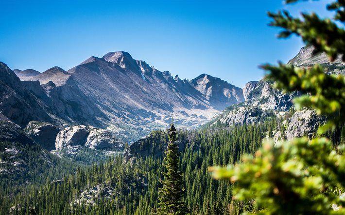 America, 4k, Rocky Mountain National Park, summer, forest, Colorado, USA