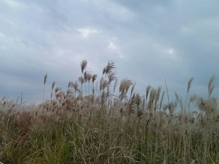 #하늘공원 #가을