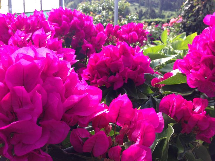 #Stauden sind perfekte #Sommerpflanzen. #Pflegeleicht und wunderbar in der #Blüte.